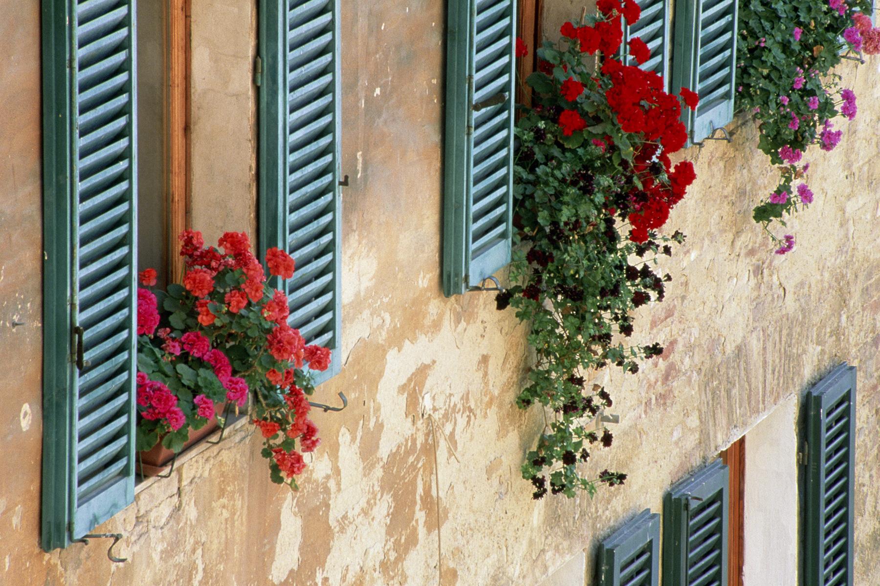Alison Shutters, Tuscany, Italy