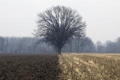 Farmlands, Ohio